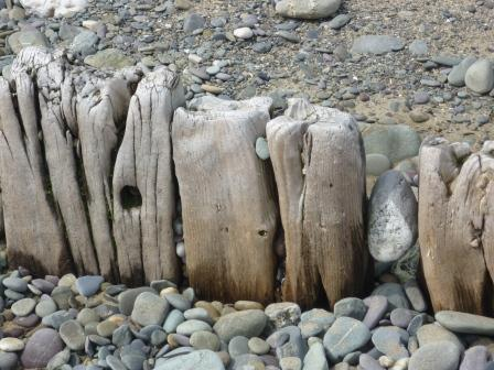 Pebbles wedged into seaworn crevices in the wood tide breakers